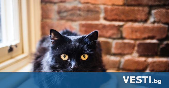 Ч икагска котка може да разполага вече само с още