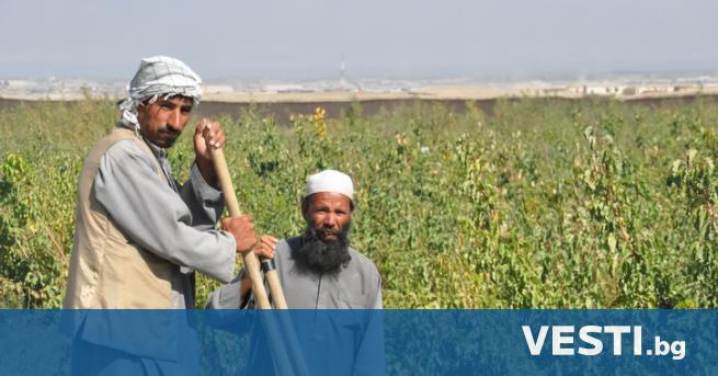 В неделя правителството на талибаните в Афганистан стартира програма за