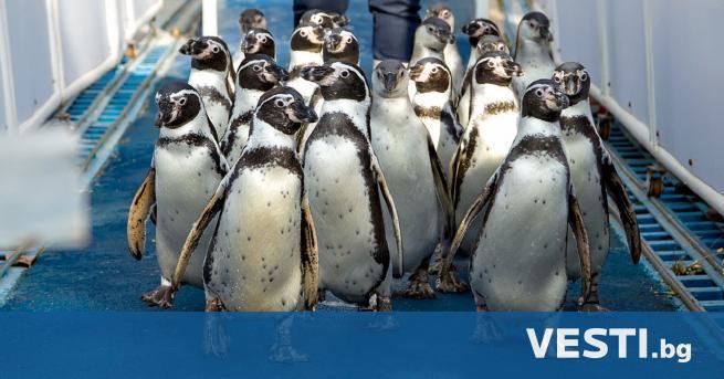 С лужители на зоопарка в Сейнт Луис, САЩ, са измислили