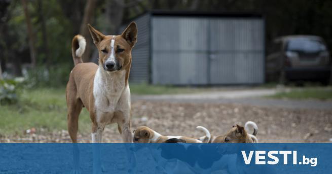 Г лутница кучета нападнаха и нахапаха жена в Мездра. Инцидентът