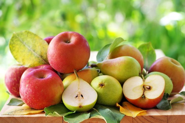 плод зеленчук плодове зеленчуци