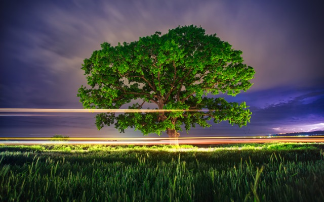 буря дърво ливада природа светлина