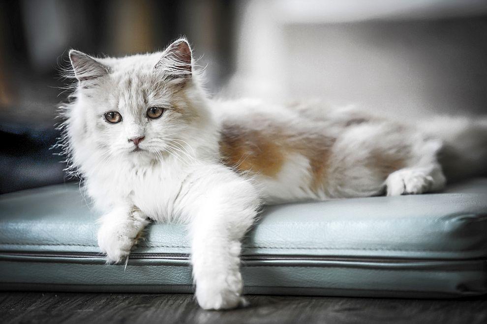 В Германия и Швейцария премахването на ноктите на котките е забранено със закон.